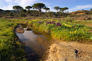 Go to the photo gallery about Massif des Maures area in Provence