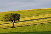 Go to the photo gallery about rural landscapes and french countrysides
