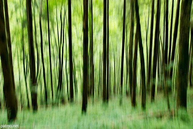 Photos abstraites de détails naturels - Arbres fantômes ...