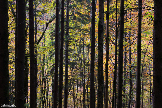 Image of the colorful trees of Valserine forest in autumn
