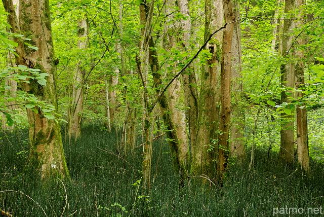 Nouvelles images sous bois au printemps - Sous bassement en bois ...