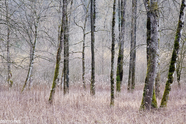 Photo of trees in the forest along Usses river