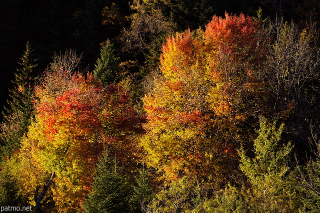 Picture with flaming autumn colors in Haute Savoie