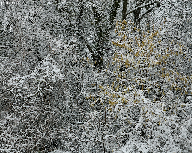 Winter photograph at forest edge