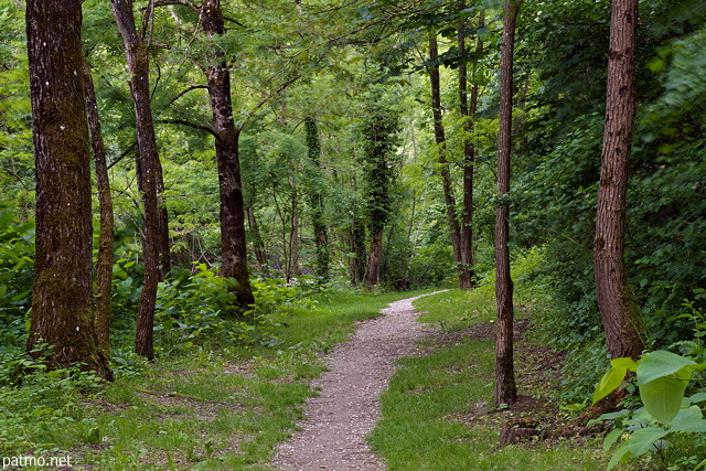 Picture of a little path in springtime forest along Usses river in Frangy