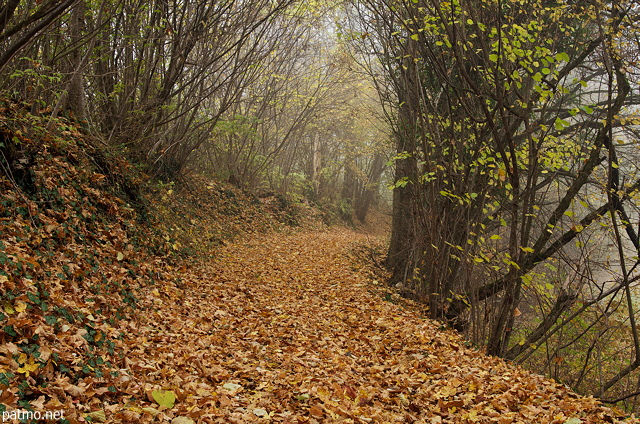 nouvelles images brume et feuilles d 39 automne le long d 39 un chemin en sous bois. Black Bedroom Furniture Sets. Home Design Ideas