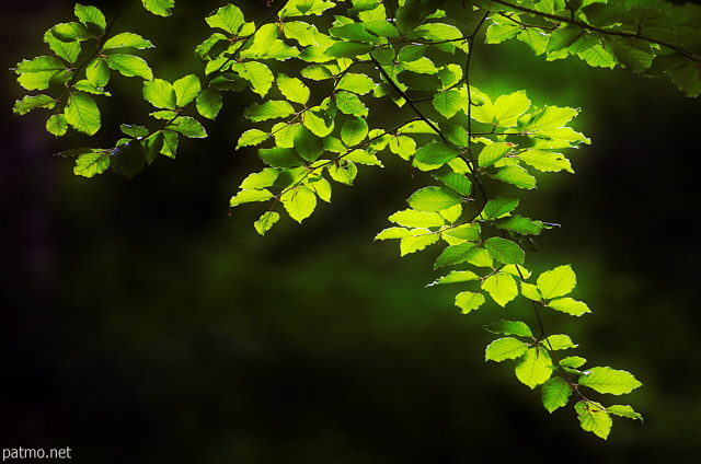 Photo of backlit foliage