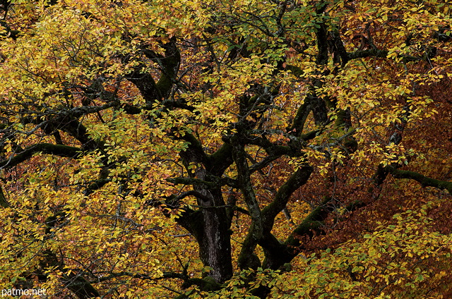 Oak foliage and branches in autumn