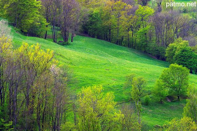 Paysage rural au printemps autour d'arcine en haute savoie