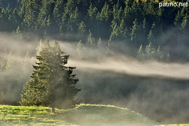 Photograph of the morning fog on Bellecombe plateau in french Jura