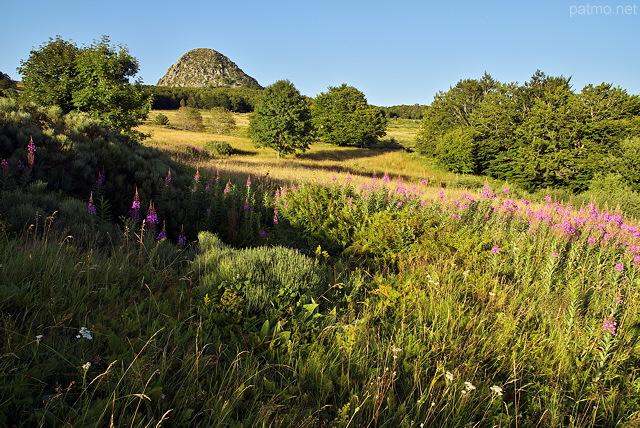photographies patrick morand le mont gerbier de jonc dans les pr s fleuris de la montagne. Black Bedroom Furniture Sets. Home Design Ideas