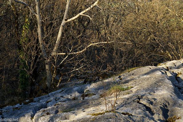 photographies patrick morand sol calcaire arbres et arbustes sur le lapiaz de chaumont. Black Bedroom Furniture Sets. Home Design Ideas