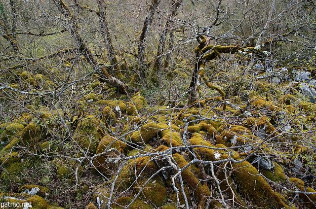 Nouvelles images vieux arbres et rochers recouverts par - Mousse sur les arbres ...