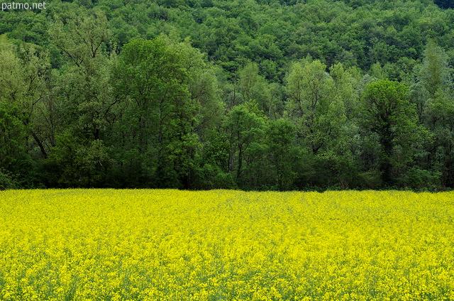 nouvelles images paysage rural avec un champ de colza en fleurs devant des arbres verts. Black Bedroom Furniture Sets. Home Design Ideas