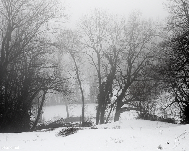 Photograph with dark trees, snow and mist in the french countryside