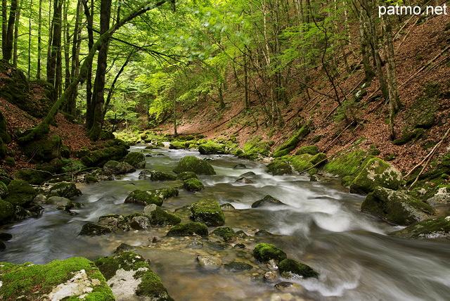 La rivière de la valserine en sous bois dans le parc naturel