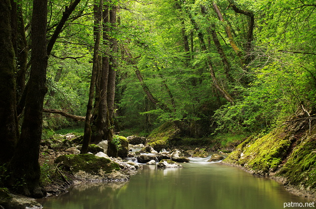 Image of green springtime forest along Fornant river
