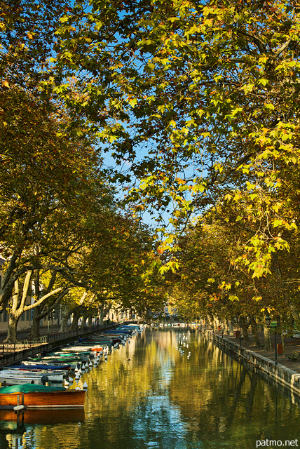Image of autumn leaves above Vasse channel in Annecy