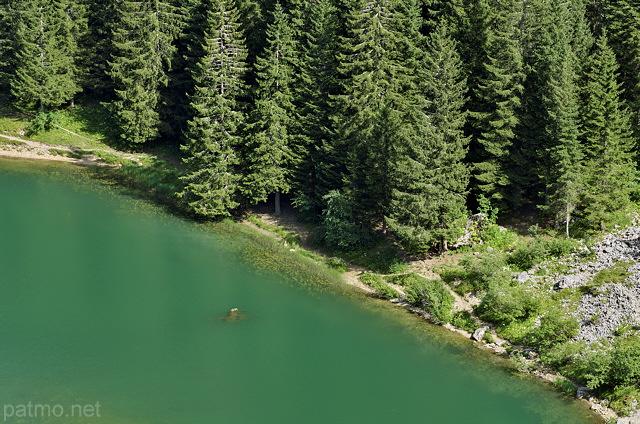 Photo eaux et for ts du lac b nit dans le massif des bornes for Eaux et forets
