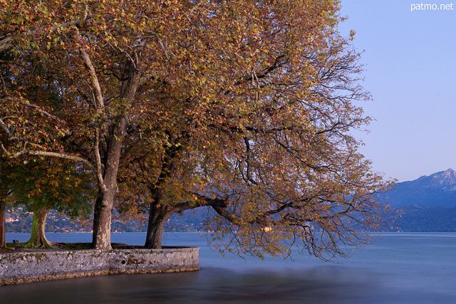 Image of majestuous autumn trees on the banks of Annecy lake