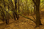 Photograph of autumn in Provence forest