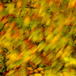 Photograph of autumn leaves blown by the wind