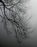 Image of branches in the mist