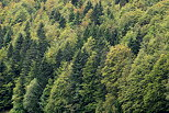 Photograph of forest colors on Bellecombe plateau