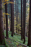 Image of Valserine forest in autumn