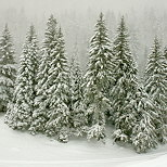 Image of pine trees in the snow in Valserine valley