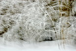 Image of snow in Valserine forest