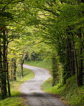 Image of a winding road through Arcine forest