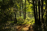 Image of the summer light in Chilly forest