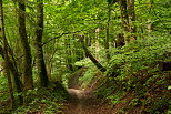 Image of a forest path through the lush green near Chilly