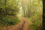 Picture of a little path through the morning haze and the warm colors of the forest