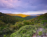 Image of the sunrise of Provence forest in Massif des Maures area