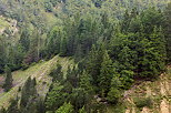 Photo of a coniferous forest in the mountains of Haut Jura Natural Park