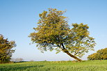 Photo of an autumn tree against blue sky in the french countryside