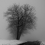 Photo of snow and fog along a country road in winter