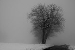 Image with a dark winter mood with snow and fog