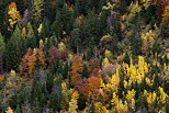 Image of mountain forest with autumn colors in Villards Valley