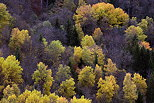 Photograph of the autumn colors on the mountain forest