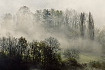 Photo of trees in the clearing fog of an autumn morning
