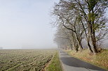 Image of a little country road bordered by trees in the winter mist