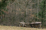 Picture of firewood stacked along the forest edge