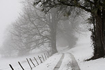 Photograph of a rural path with snow and mist near Savigny Haute Savoie