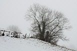 Winter rural landscape in the french countryside near Savigny