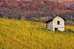 Picture of an old stone cabin in the autumn vineyard. France, Savoie department