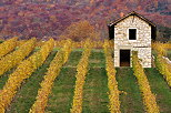 Image of a tiny stone house in the autumn vineyard near Ruffieux, Savoie department