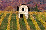 Image of autumn in Chautagne vineyard in France